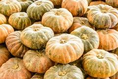 Closeup photo of fresh pumpkins.  Stock Photo