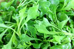 Closeup photo of Fresh Watercress Stock Images