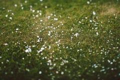 Closeup Photo of Green Grass stock images