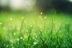 Closeup Photo of Green Grass Field royalty free stock photography