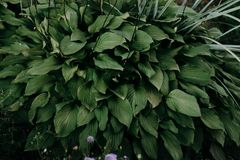 Closeup Photo of Green Leafed Plant royalty free stock photos
