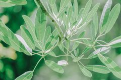 Closeup Photo of Green Leafed Plant royalty free stock images
