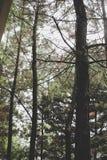 Closeup Photo of Green Trees Royalty Free Stock Photography