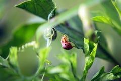 Ladybug green leaf on a sunny day stock photo