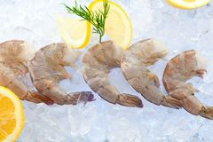 Closeup photo of large size of frozen raw shrimp with tail removed. royalty free stock photography