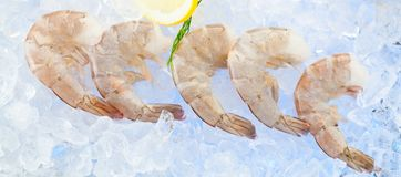Closeup photo of large size of frozen raw shrimp with tail removed. stock photos