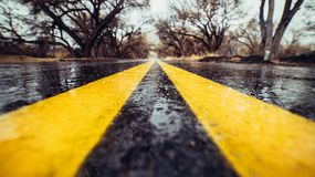 Free Closeup Photo Of Yellow Marking Lane On Wet Asphalt Road In Forest. Royalty Free Stock Image - 113405936