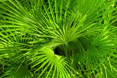 Closeup photo of a palm tree Stock Photos