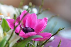 Closeup Photo of Pink Petaled Flower royalty free stock photography