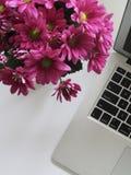 Closeup Photo of Pink Petaled Flowers Stock Image