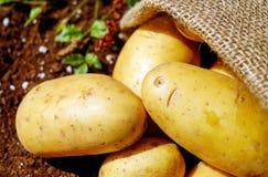 Closeup Photo of Potatoes Stock Photos