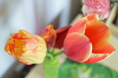 Closeup photo of red tulip core, abstract floral background. Spring time nature detail Stock Images