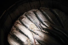 Closeup photo of salted herring in a wooden barrel Royalty Free Stock Photo