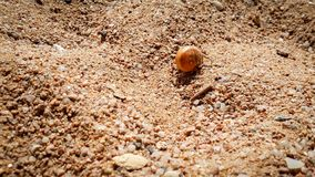 Closeup image of small hermit crab in shell crawling on hot sand at sea beach. Closeup photo of small hermit crab in shell crawling on hot sand at sea beach royalty free stock photo