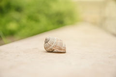 Closeup photo of snail in the nature Stock Photography