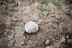 Closeup photo of snail in the nature Stock Photo