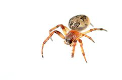 Closeup photo of a spider stock image