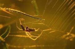 Closeup photo of a spider Royalty Free Stock Photography