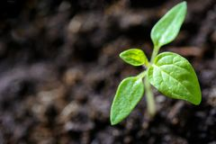 Closeup Photo of Sprout royalty free stock images