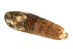 Closeup photo of Taro, root vegetable Royalty Free Stock Images