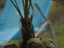 Palm base Stock Photo