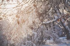 Closeup Photo of Tree Branch With Snow royalty free stock photos