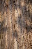 Closeup photo of a tree trunk Royalty Free Stock Image
