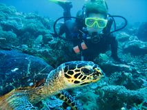 Closeup photo of a turtle and a young women scuba diver. The diver is looking forward. The turtle is on foreground. Closeup photo of a turtle and a scuba diver stock image
