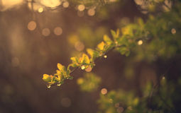 Closeup photo of a wet branch in early morning Stock Photography