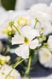 Closeup photo of a white anemone bouquet Stock Image