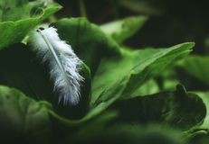 Closeup Photo of White Feather on Green Leaf royalty free stock photography