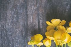 Closeup Photo of Yellow Petaled Flowers Stock Photography