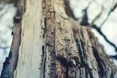 Closeup Photography of Bare Tree Royalty Free Stock Photos