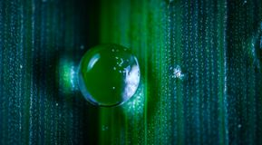 Closeup Photography of Dew Stock Photography