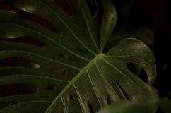 Closeup Photography of Green Heart Cut Leaf royalty free stock photography