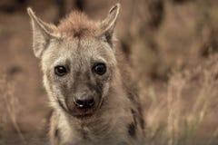 Closeup Photography of Grey and Tan Animal Royalty Free Stock Images