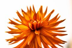Closeup Photography of Orange Petaled Flowers Stock Image