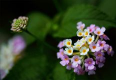 Closeup Photography of Purple and White Cluster Flowers royalty free stock images