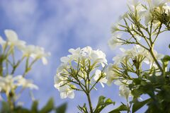 Closeup Photography of White Petaled Flower Royalty Free Stock Photos