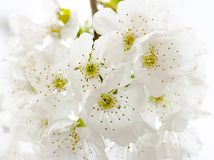 Closeup Photography of White Petaled Flowers Stock Image