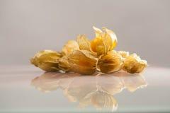 Closeup of Physalis peruviana fruits with light grey background Royalty Free Stock Photo