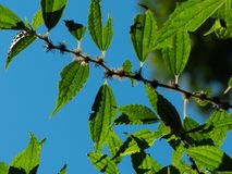 Closeup Pic of a branch of tree royalty free stock photography