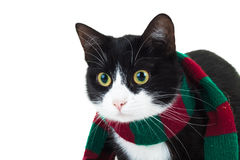 Closeup picture of a cat wearing christmas knitted scarf Royalty Free Stock Images