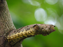 Closeup Picture of Caterpillar Royalty Free Stock Image