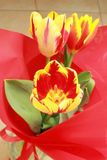 Colorful tulips. Closeup picture of a colorful tulips in red wrapping paper Stock Photography