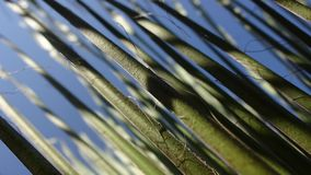 Closeup picture of a grass royalty free stock image