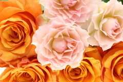 Closeup Picture Of Roses Royalty Free Stock Photo