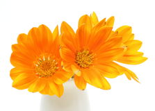 Closeup picture of orange gazania in a vase Stock Photography