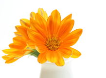 Closeup picture of orange gazania in a vase Royalty Free Stock Photography