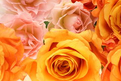 Closeup picture of rose Royalty Free Stock Photo